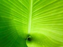 hoja verde con gotas del agua Fotos de archivo