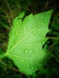 Hoja verde con gotas del agua fotografía de archivo