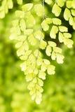 Hoja verde con la luz del sol de la mañana con el fondo verde del bosque fotos de archivo