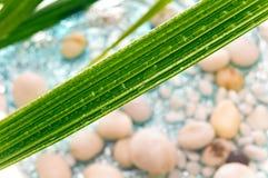 Hoja verde con las gotas de agua. Fotografía de archivo libre de regalías