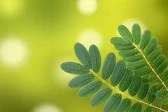 Hoja verde con las gotitas de agua Foto de archivo libre de regalías