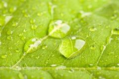 Hoja verde con las gotitas de agua Fotografía de archivo libre de regalías