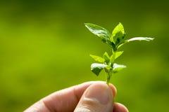 Hoja verde con las gotitas de la lluvia Fotos de archivo libres de regalías