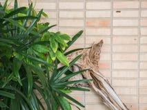 Hoja verde con madera en la tierra de la parte posterior del ladrillo Imagenes de archivo
