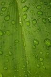 Hoja verde con textura de la gota del agua Fotografía de archivo libre de regalías