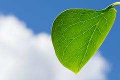 Hoja verde con un cielo nublado azul Imágenes de archivo libres de regalías