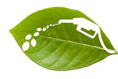 Hoja verde con un combustible cortado Imagenes de archivo