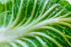 Hoja verde de la col con descensos del agua en macro de la textura de la sol Fotos de archivo libres de regalías