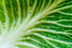 Hoja verde de la col con descensos del agua en macro de la textura de la sol Imagen de archivo libre de regalías