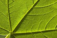 Hoja verde de la naturaleza Fotografía de archivo