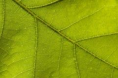 Hoja verde de la naturaleza Foto de archivo