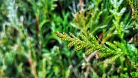 Hoja verde de la naturaleza Imagen de archivo libre de regalías