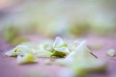 Hoja verde de la naturaleza en la tierra con el fondo borroso Fotos de archivo libres de regalías