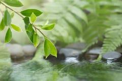 Hoja verde de la planta con el helecho y del guijarro en el agua Fotos de archivo libres de regalías