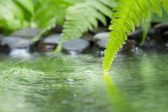 Hoja verde de la planta con el helecho y del guijarro en el agua Imagenes de archivo