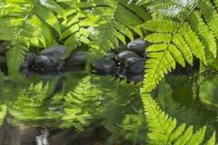 Hoja verde de la planta con el helecho y del guijarro en el agua Fotos de archivo