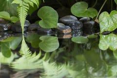 Hoja verde de la planta con el helecho y del guijarro en el agua Fotografía de archivo