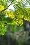 Hoja verde de la planta en jardín Fotografía de archivo libre de regalías