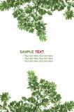 Hoja verde de la textura, arbusto Foto de archivo libre de regalías