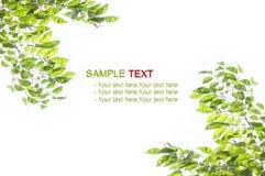 Hoja verde de la textura, arbusto Fotos de archivo