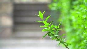 Hoja verde de un arbusto almacen de video