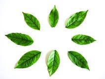 Hoja verde del círculo en el fondo blanco foto de archivo