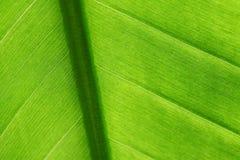 Hoja verde del detalle Imagen de archivo libre de regalías