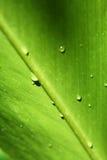 Hoja verde del detalle Foto de archivo libre de regalías