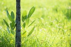 Hoja verde del follaje con el fondo natural del bokeh fotografía de archivo