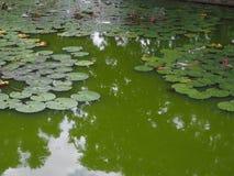 Hoja verde del loto fotografía de archivo