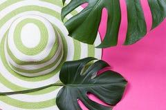 Hoja verde del monstera con las gafas de sol y el sombrero de paja Imagen de archivo libre de regalías