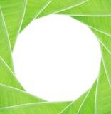 Hoja verde del plátano imagen de archivo