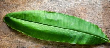 Hoja verde del plátano en el fondo de madera Fotografía de archivo libre de regalías