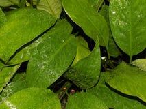 Hoja verde después de la lluvia fotografía de archivo