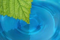 Hoja verde en el agua Fotografía de archivo