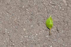 Hoja verde en el asfalto fotografía de archivo libre de regalías