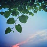 Hoja verde en el cielo azul de la puesta del sol en naturaleza Imagen de archivo