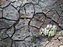 Hoja verde en el piso de la sequía Imágenes de archivo libres de regalías