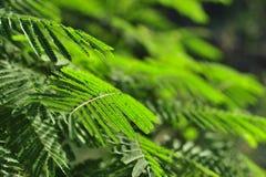 Hoja verde en jardín Fotografía de archivo libre de regalías