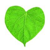 Hoja verde en la dimensión de una variable del corazón Fotos de archivo