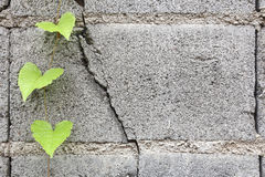Hoja verde en los bloques de cemento Foto de archivo libre de regalías