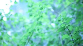 Hoja verde en naturaleza metrajes