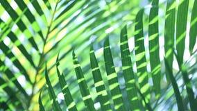 Hoja verde en naturaleza almacen de video