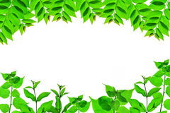 Hoja verde en naturaleza fotografía de archivo