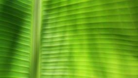 Hoja verde en naturaleza almacen de metraje de vídeo