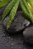 Hoja verde en piedra del balneario en superficie negra Fotografía de archivo