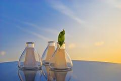 Hoja verde en réplica Foto de archivo libre de regalías