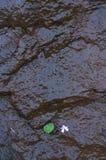Hoja verde en roca mojada dura Imagenes de archivo