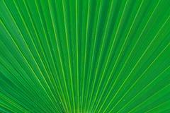 Hoja verde en Tenerife Planta hermosa Fotos de archivo