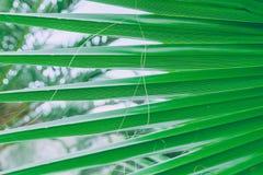 Hoja verde en Tenerife Planta hermosa Imagen de archivo